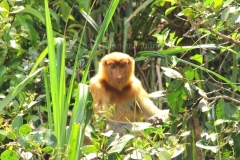 orangutans_gallery_10_20140516_1673370110