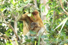 orangutans_gallery_11_20140516_2074168931