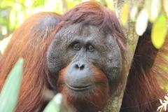 orangutans_tours_2_20140516_1593902546